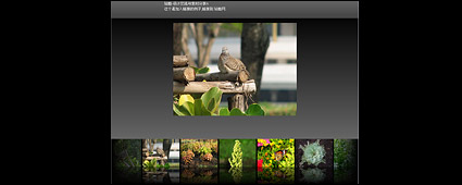Flash + xml exquisite picture display program